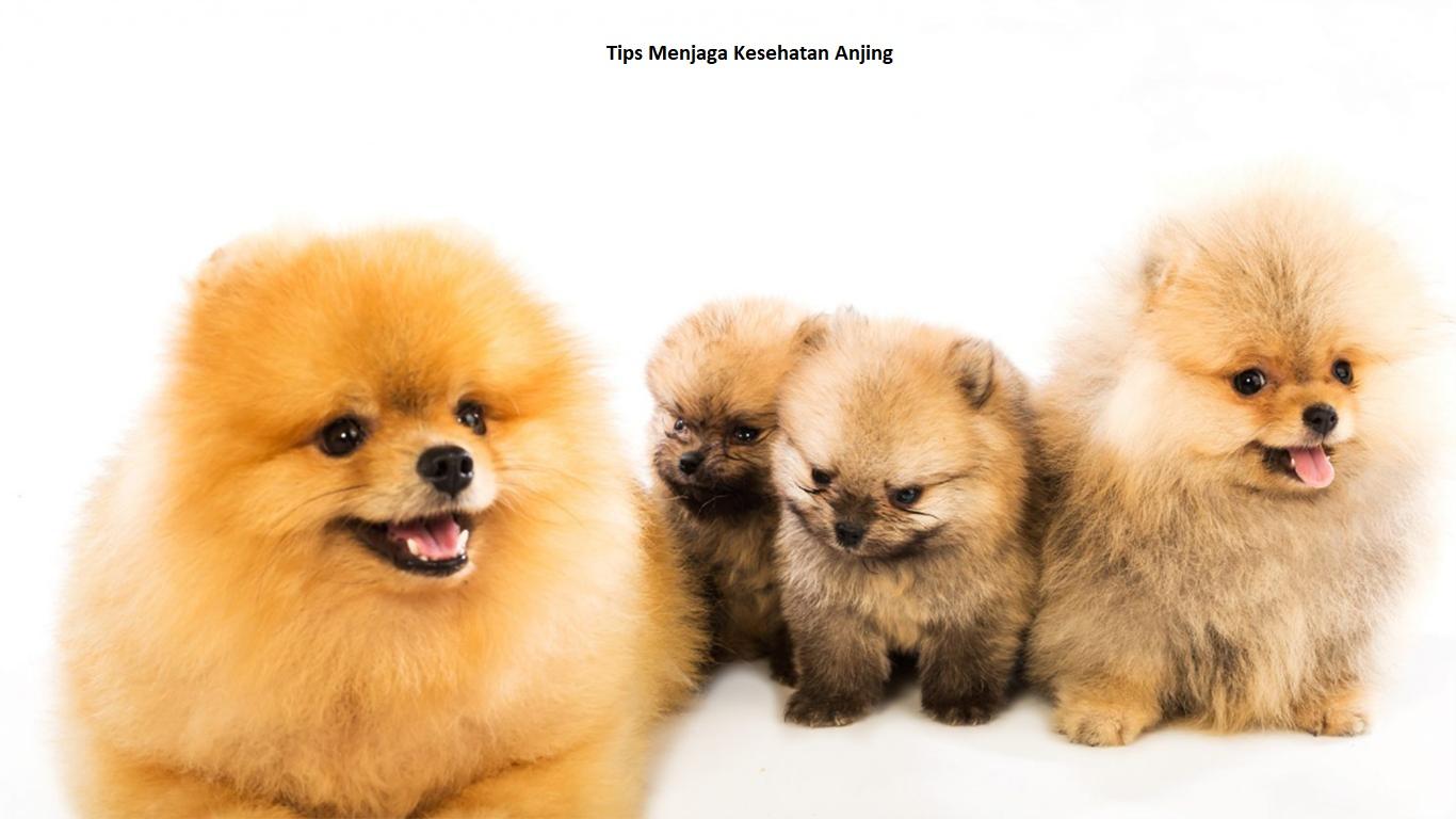 Tips Menjaga Kesehatan Anjing