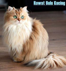 Rawat Bulu Kucing