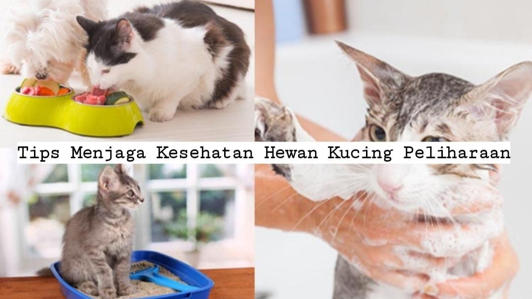 Tips Menjaga Kesehatan Hewan Kucing Peliharaan
