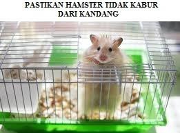 Memastikan Hamster Tidak Kabur Dari Kandang