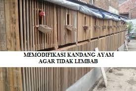 Memodifikasi Kandang Ayam Supaya Tidak Gampang Lembab