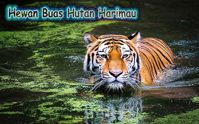 Hewan Buas Hutan Harimau
