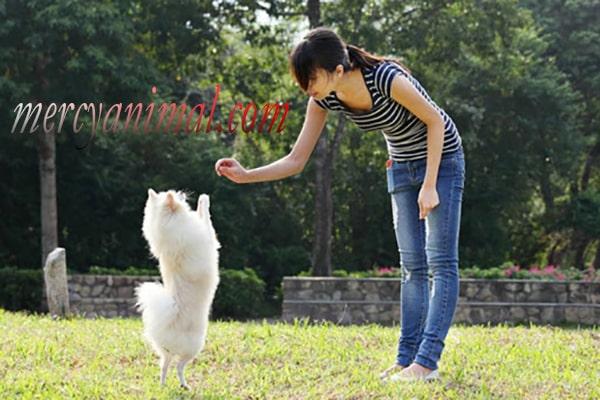 Cara Melatih Anak Anjing agar Patuh