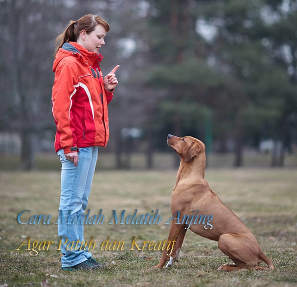 Cara Mudah Melatih Anjing Agar Patuh